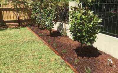 Plants for Bayside areas of Melbourne, Australia