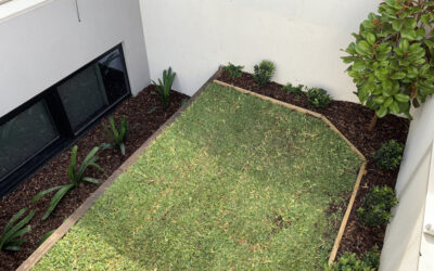 Buffalo Turf Maintenance Tips For Melbourne Homeowners