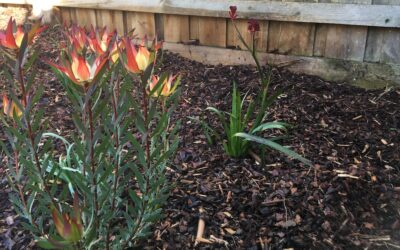 What plants will attract native wildlife in Melbourne?